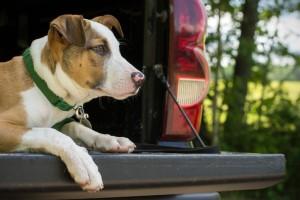 trucking pets